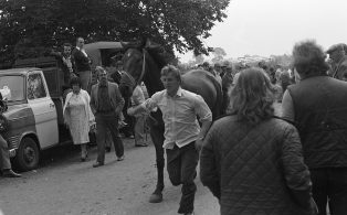 Horse Showing