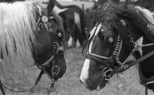 Photograph of Two Horses Heads